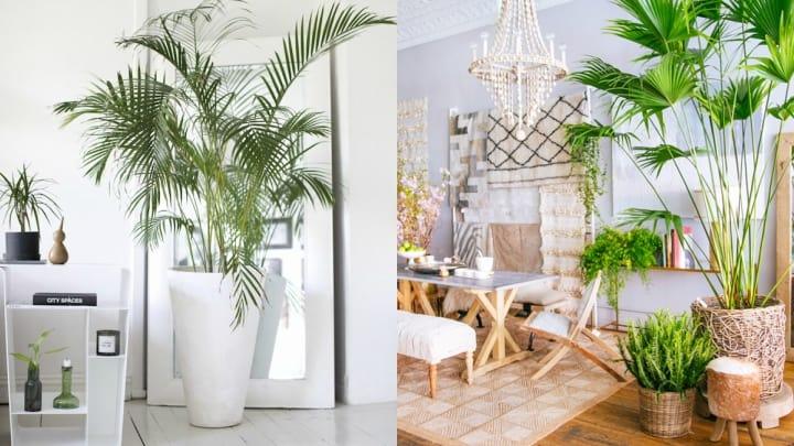 La decoración de estilo tropical - Visita Casas
