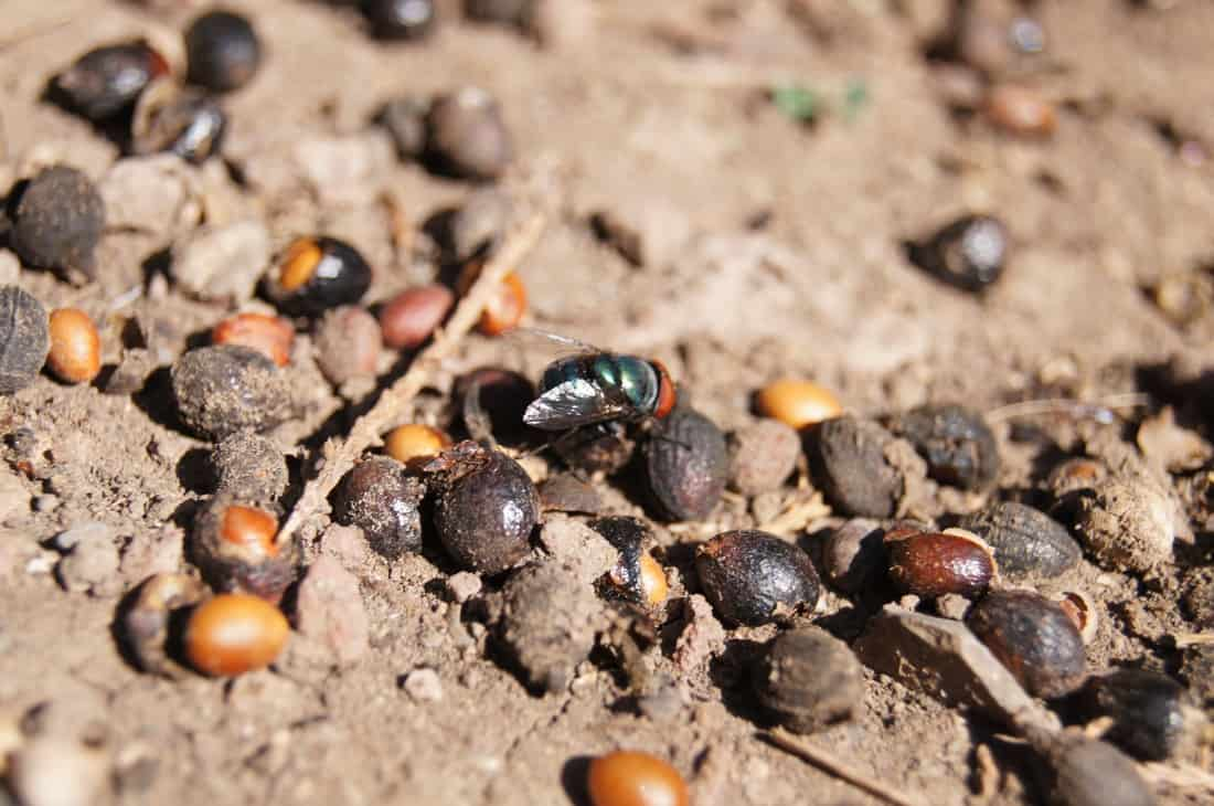 Problemas con insectos en el jard n y como solucionarlos for Insectos del jardin
