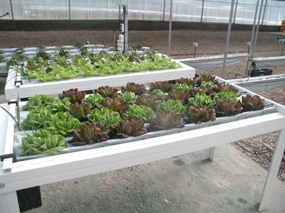 C mo hacer jardines hidrop nicos en casa - Como preparar un jardin en casa ...