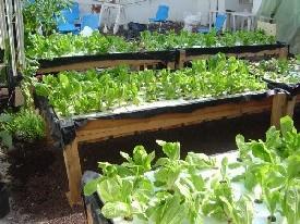 C mo hacer jardines hidrop nicos en casa - Jardin hidroponico ...