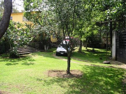 Arboles frutales en el jardin nuestra fruta del dia for Arboles frutales para jardin