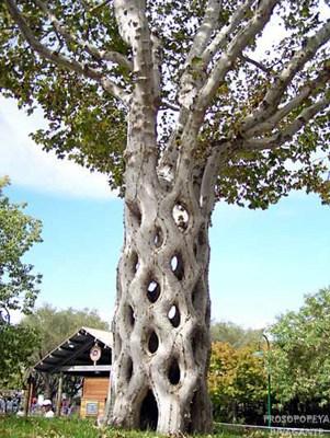 arbol con tronco trenzado