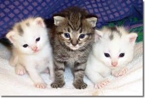 Bellos gatos pequeños