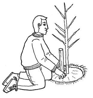 Técnicas para plantar árboles