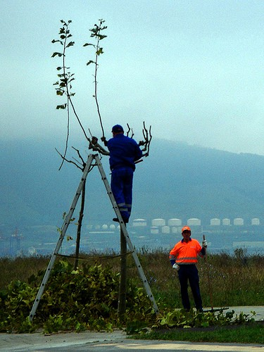 Podando ramas altas de árboles