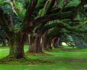 Dando formas a los árboles.
