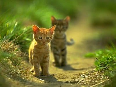 gatitos pequeños