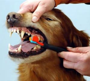 Los dientes de nuestro perro