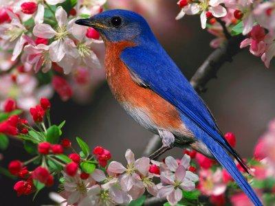 Mantener a sus pájaros saludables.