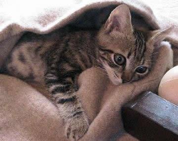 El cuidado de gatos
