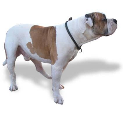 Entrenamiento elemental de perro