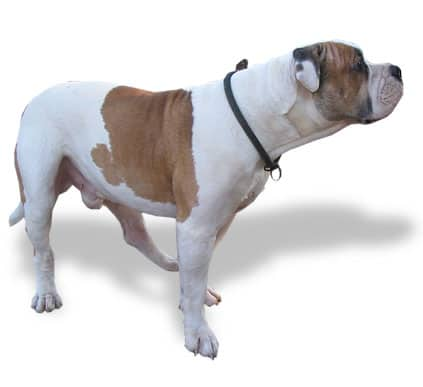 Displasia de cadera canina signos s ntomas y consejos - Cuando se puede banar a un perro ...