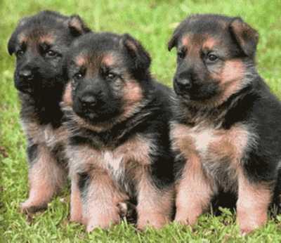 Entrenamiento para cachorros