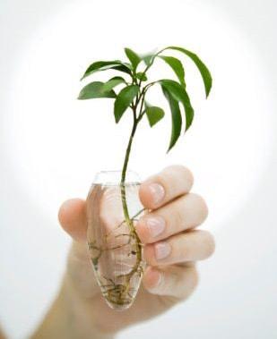 Artículo: Los problemas de los Cultivos en la Ciudad Planta-hidrop-en-mano