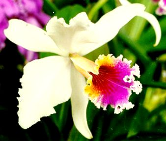 Plantar orquídeas
