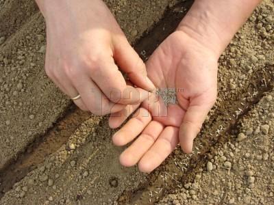 Escarificación de semillas