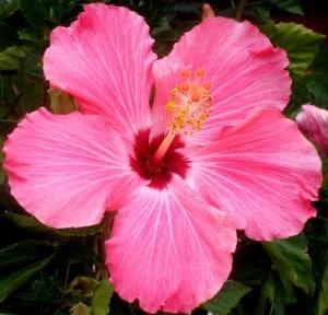 10 tipos de flores imagenes im genes taringa Nombres de plantas comunes