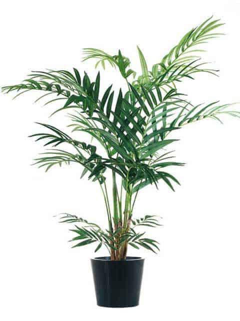 Una gu a sobre palmeras artificiales hechas en seda - Palmeras plantas exterior ...