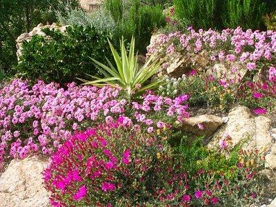 Los fertilizantes para su jardín