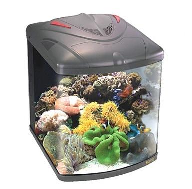 Instale un acuario de agua salada en el hogar for Peces para acuarios pequenos