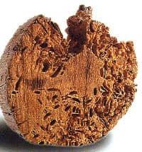 C mo reparar da os causados por termitas - Termitas en casa como matarlas ...