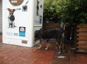 Alimentador público de perros abandonados